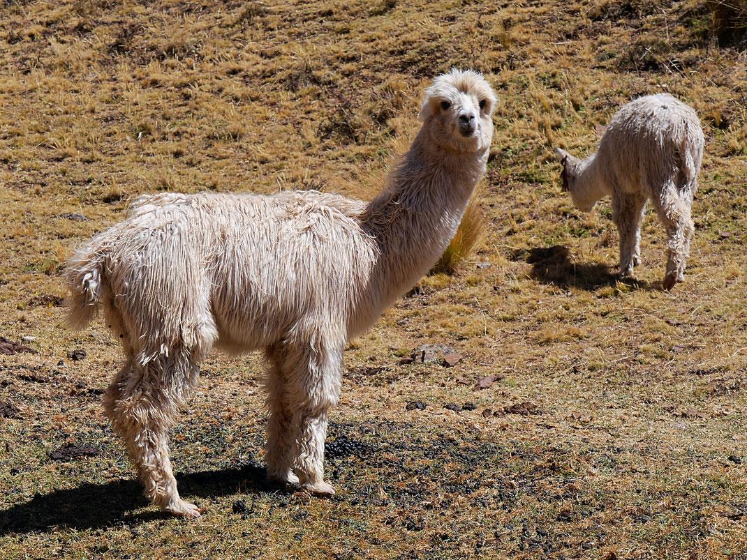 Was wollen die denn hier... Huancavelica, Peru (Foto Jörg Schwarz)