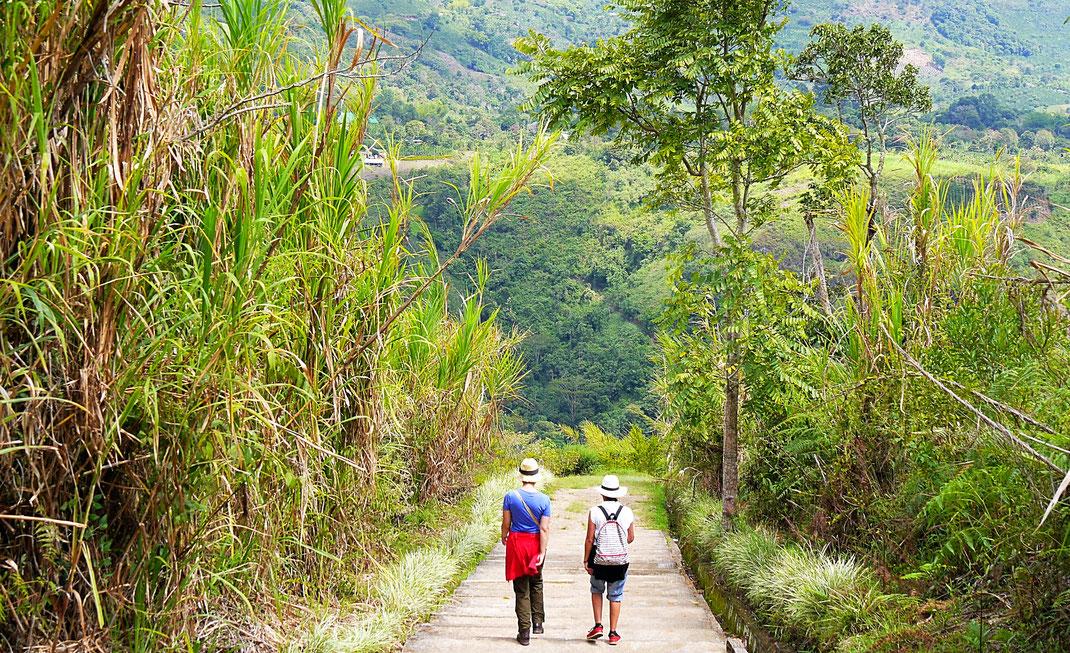 Vorbei an Zuckerrohr und anderen tropischen Gewächsen zu den nächsten Steinskulpturen... San Augustín, Kolumbien (Foto Jörg Schwarz)