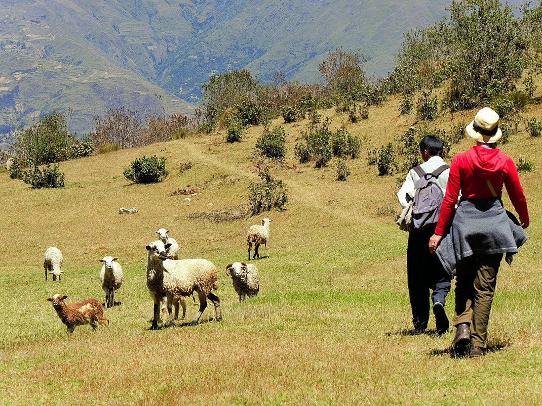 Vorbei an Schafherden, die uns mißtrauisch beäugen, Sorata, Bolivien (Foto Jörg Schwarz)