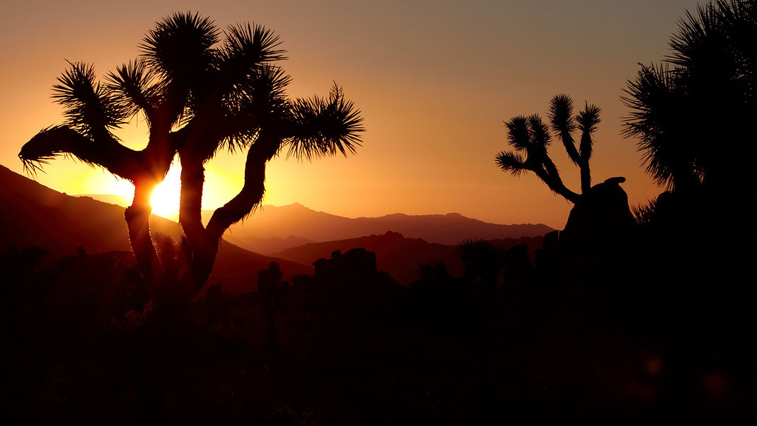 Sunrise in Joshua Tree, California (Foto: Christian Dueringer)