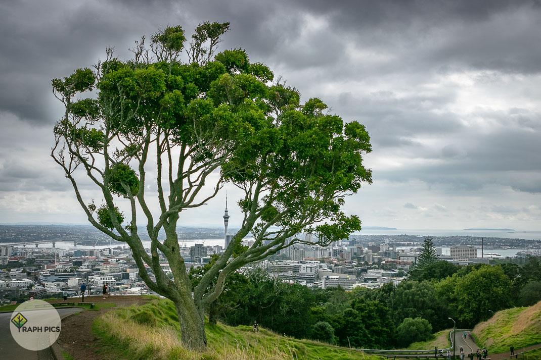 Neuseeland MT Eden1