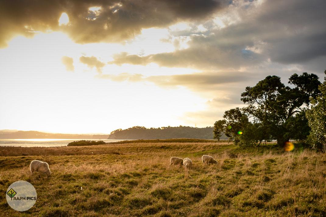 Neuseeland Sonnenuntergang3