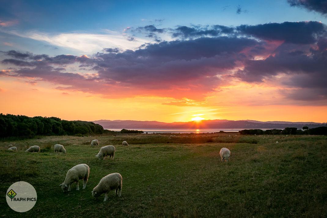 Neuseeland Sonnenuntergang4