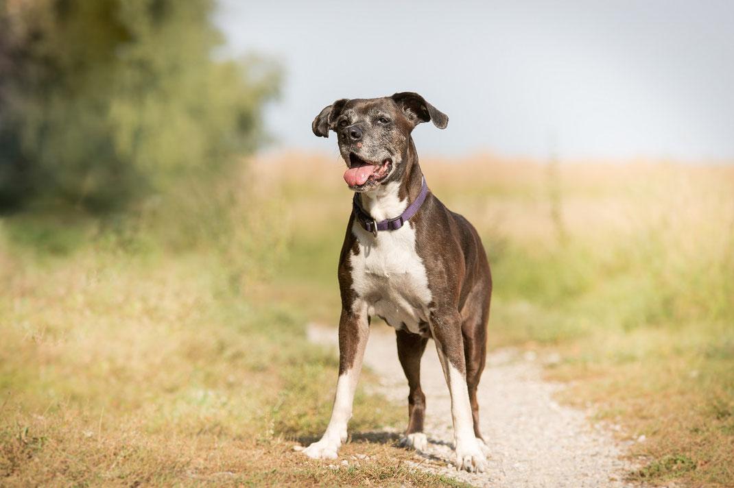 Tierfotografie Tiershooting Hundeshooting Erding Freising Landshut Moosburg München Hunde Tiere Shooting Fotograf