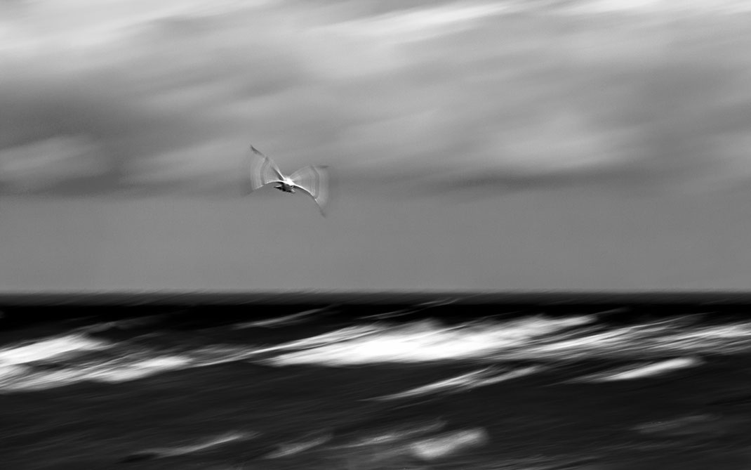 Möwe, seagull, abstrakt, abstract, intentional camera movement, icm, black and white, monochrome, Juist, Nordsee, North Sea, slowshutter, Holger Nimtz, Fotografie, photography, seascape,