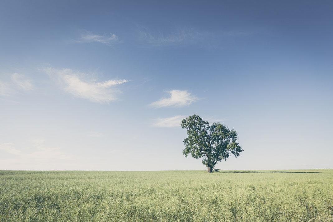 oak, tree, rural, landscape, Minimalismus, minimalism, minimalist, minimalistisch, Holger Nimtz, Wandbild, Kunst, Fotokunst,