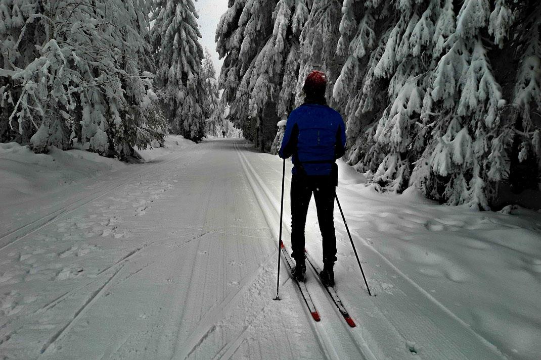 Eine Skilangläuferin ist alleine auf einer Loipe auf dem Goetheweg im Harz unterwegs. Auf den Bäumen und auf dem Weg liegt viel Schnee.