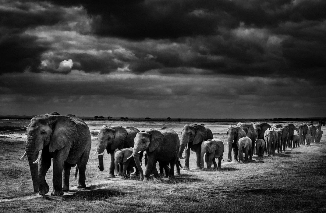 Elephants crossing the plain I, Kenya 2013 © Laurent Baheux