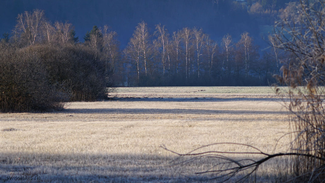 Winterstimmung im Ruggeller Riet
