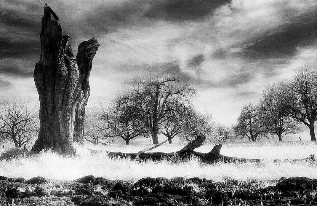 Landschaft in Lörrach-Bromabch fotografiert mit einem Infrarotfilm von Martin Boelt