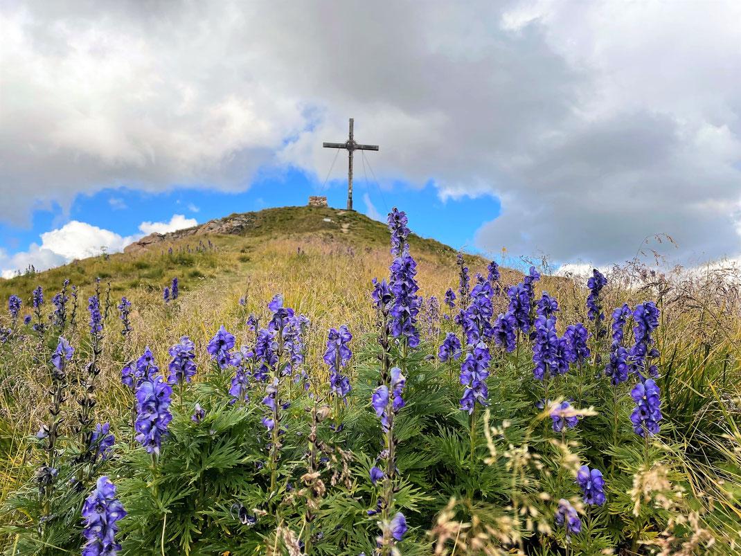 Blumenwiese unterhalb des Gipfel Piz Munschuns in Samnaun (Schweiz).