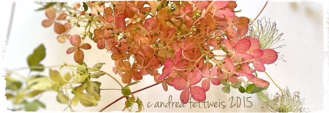 Herbstdeko mit Hortensienblüte und Clematisranke