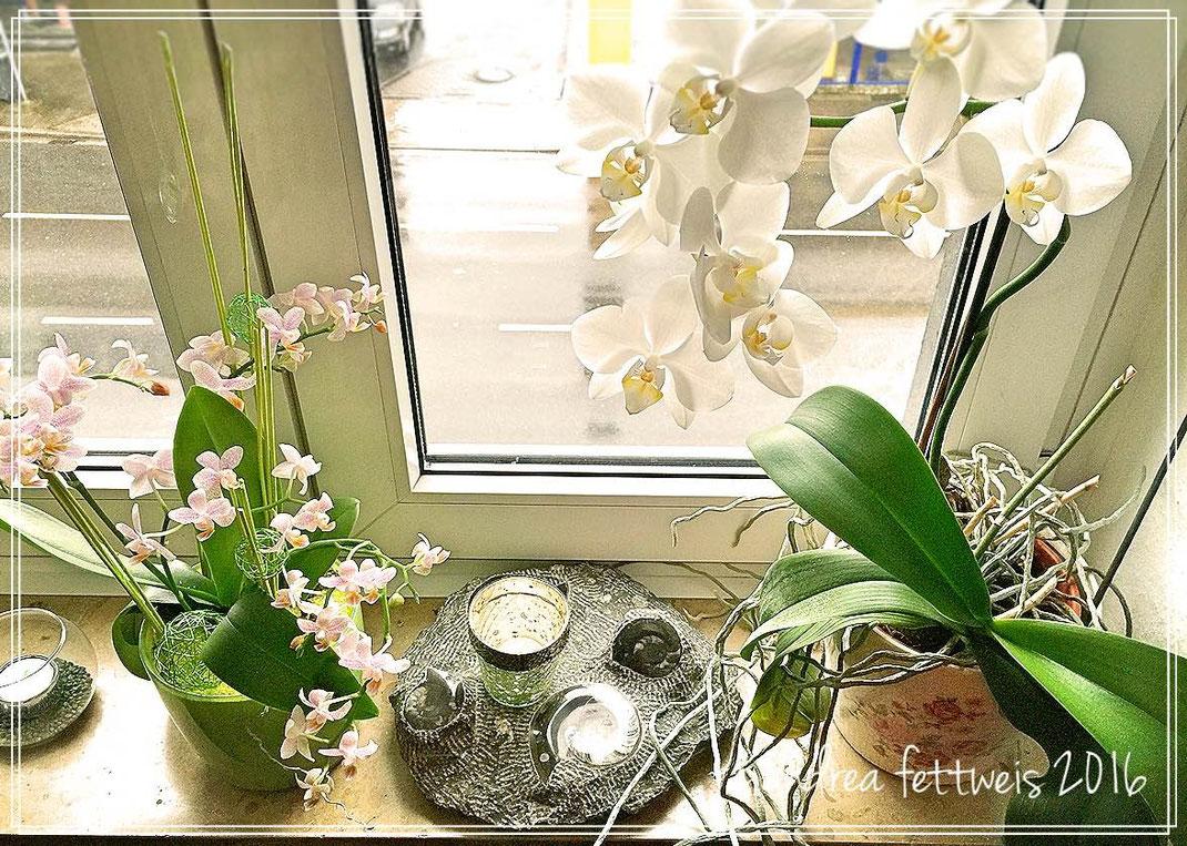 Fensterbrett mit Orchideendekoration, Versteinerungen und Windlichtern