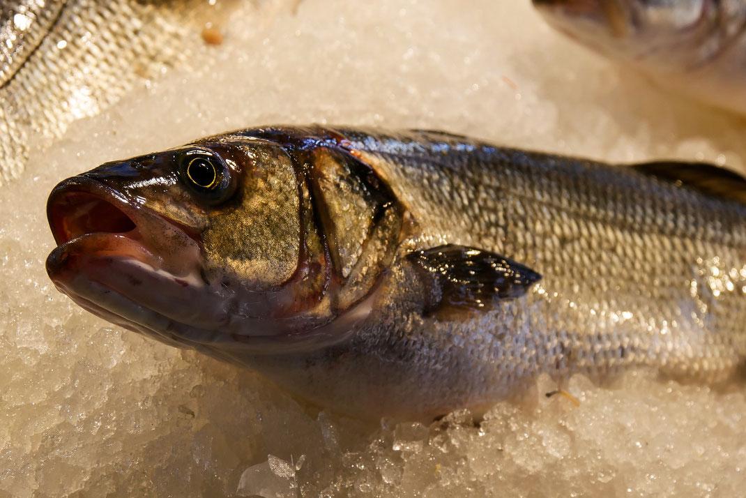 Wolfsbarsch,Robalo,Loup de Mar,dieser Atlantik Fisch wird im Restaurant Martins Kulinarium in Carvoeiro,Algarve,Portugal ganz fein zubereitet