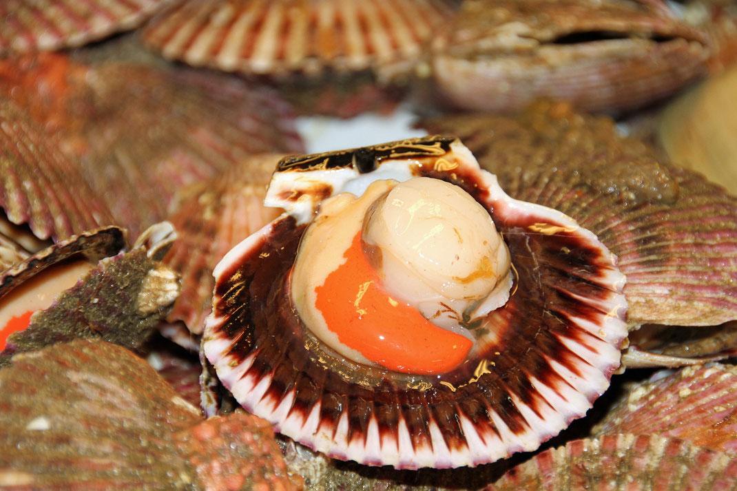 Jacobsmuschel,Vieira,Fische,Meeresfrüchte,Martins Kulinarium,Carvoeiro,Algarve,Portugal,Mobile Kochschule