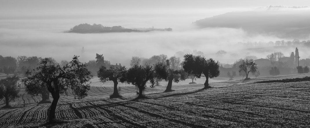 Olivenholz,Olivenbäume,Oliveiras,Martins Kulinarium,Carvoeiro,Algarve,Portugal,Mobile Kochschule
