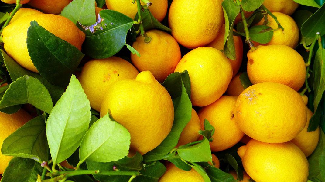 Zitronen,Limão,Zitrusfrucht,Martins Kulinarium,Carvoeiro,Algarve,Portugal,Mobile Kochschule