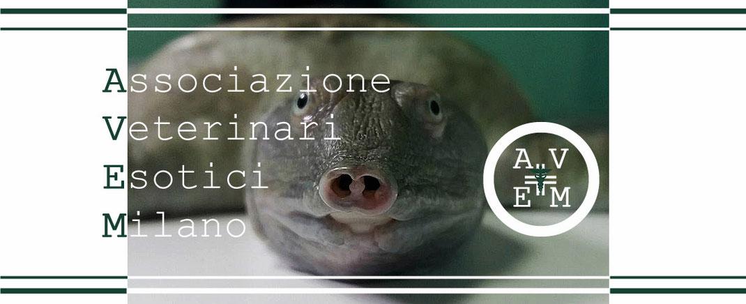 Associazione Veterinari Esotici Milano