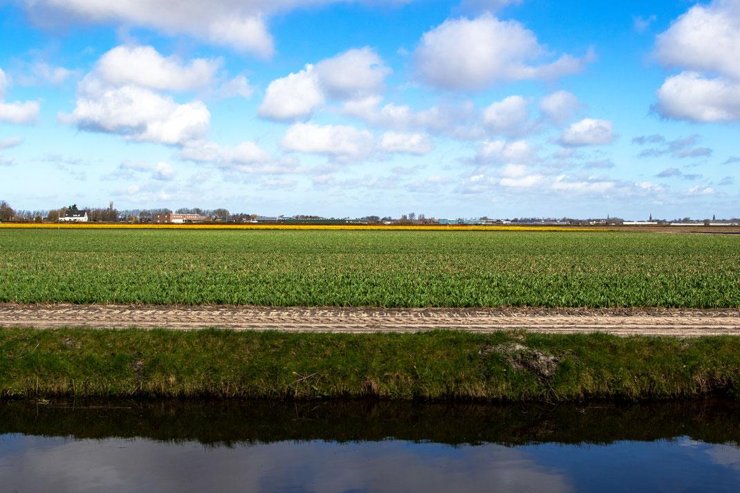 Tulpenfeld Kanal Keukenhof virginie varon
