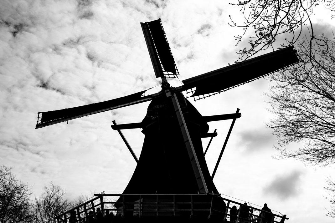 Windmühle Keukenhof Virginie Varon
