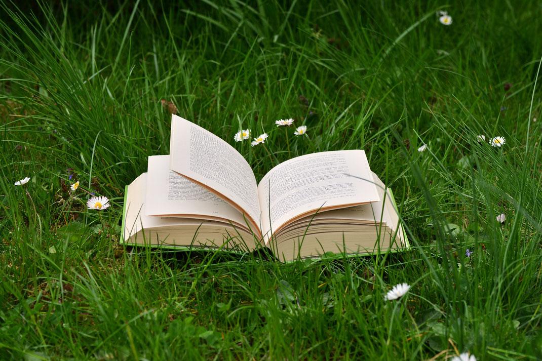 Buch in einer Wiese