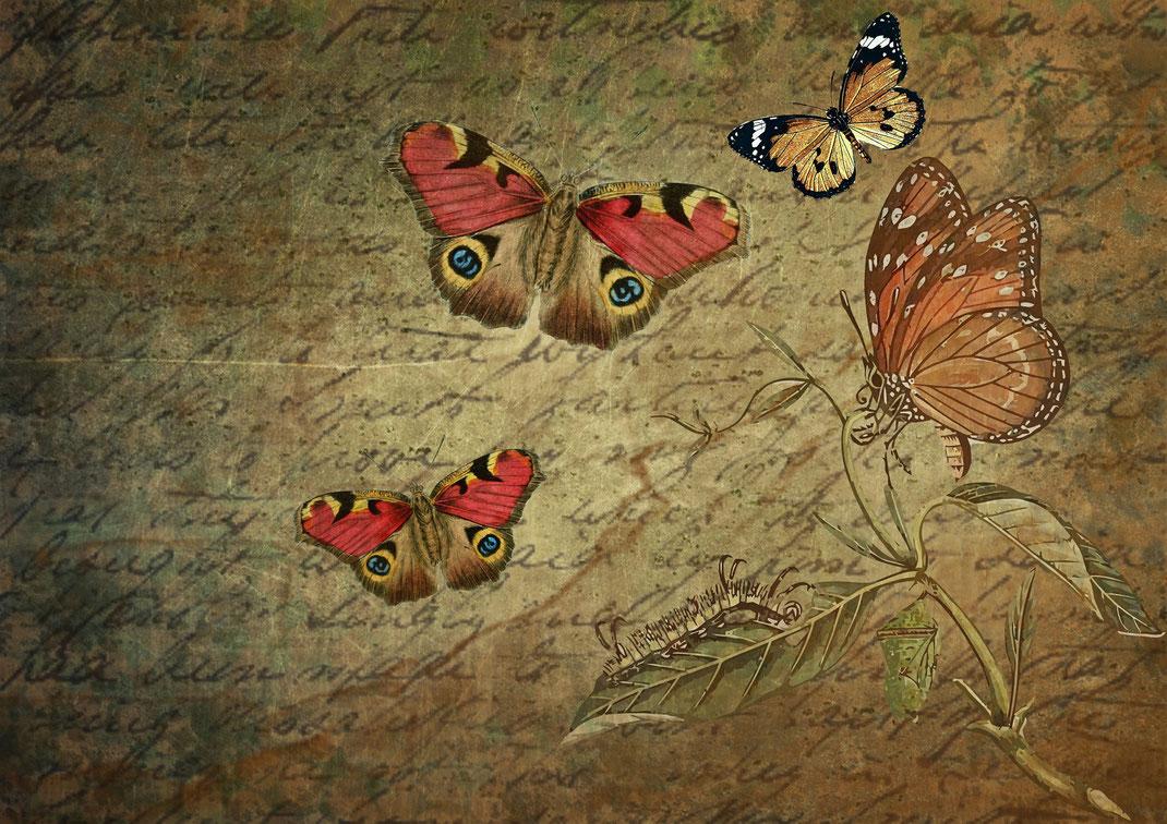 Schmetterlinge auf Papier