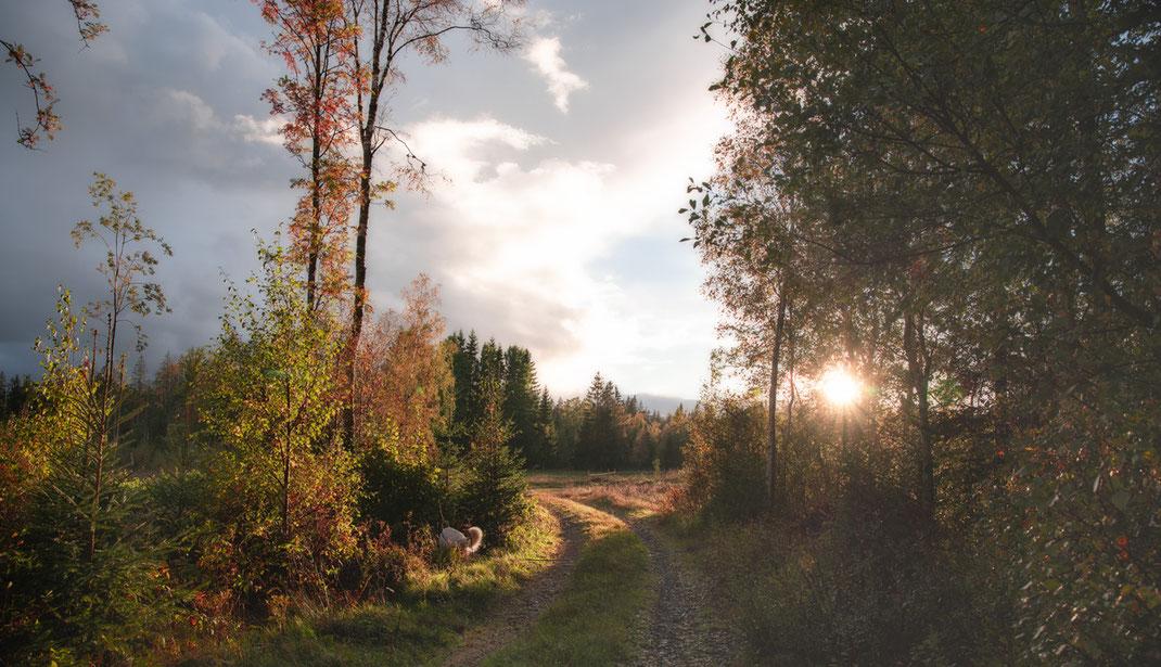 Waldweg bei Sonnenuntergang Naturverbunden idealhus Ferienhaeuser aus Holz