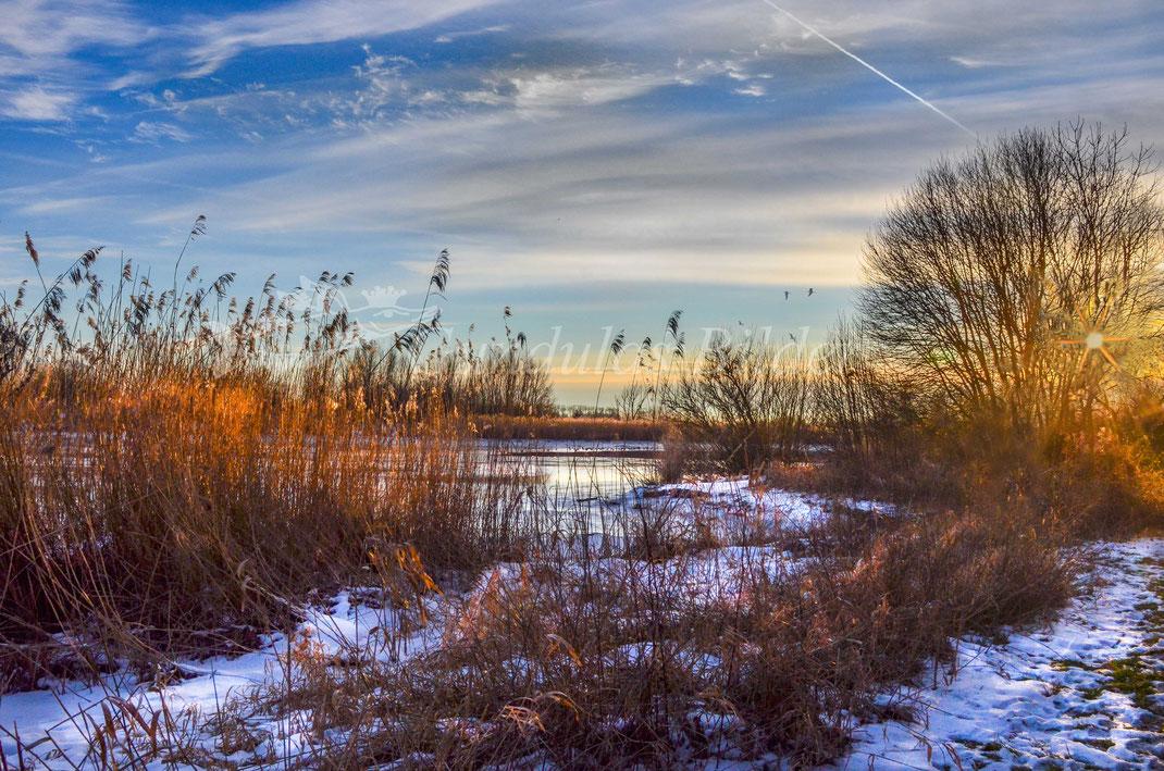 Winter an der Oste bei Klint 202110214-9938a
