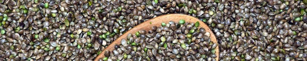 Hanfprotein - wertvolle Eiweißquelle - vegansports fit & healthy