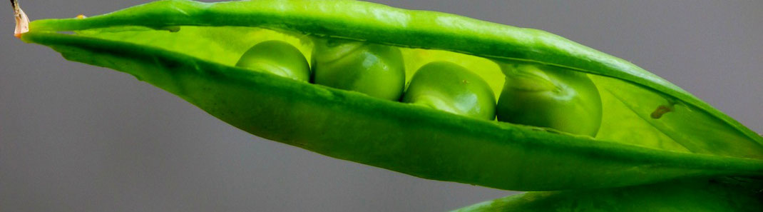 Erbsen - hochwertiger Eiweißlieferant - vegansports fit & healthy