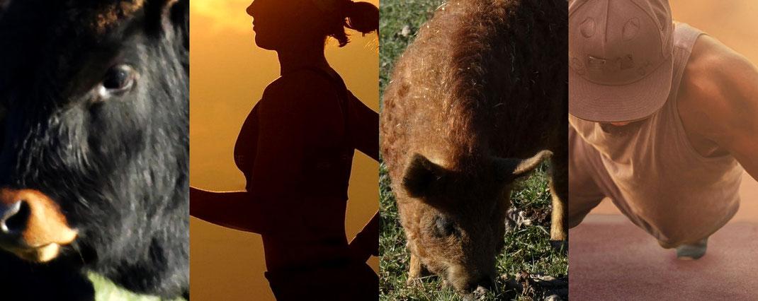Vegane Ernährung und Sport - Tiere - vegansports fit & healthy