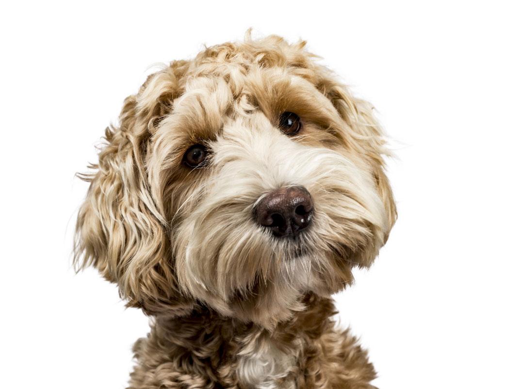 #myofficedog2021 · My Office Dog 2021 · Reise zum Kollege Hund Probetag am 24. Juni 2021 · Stephanie Kohlsaat Creative Mind FeelGood @Work