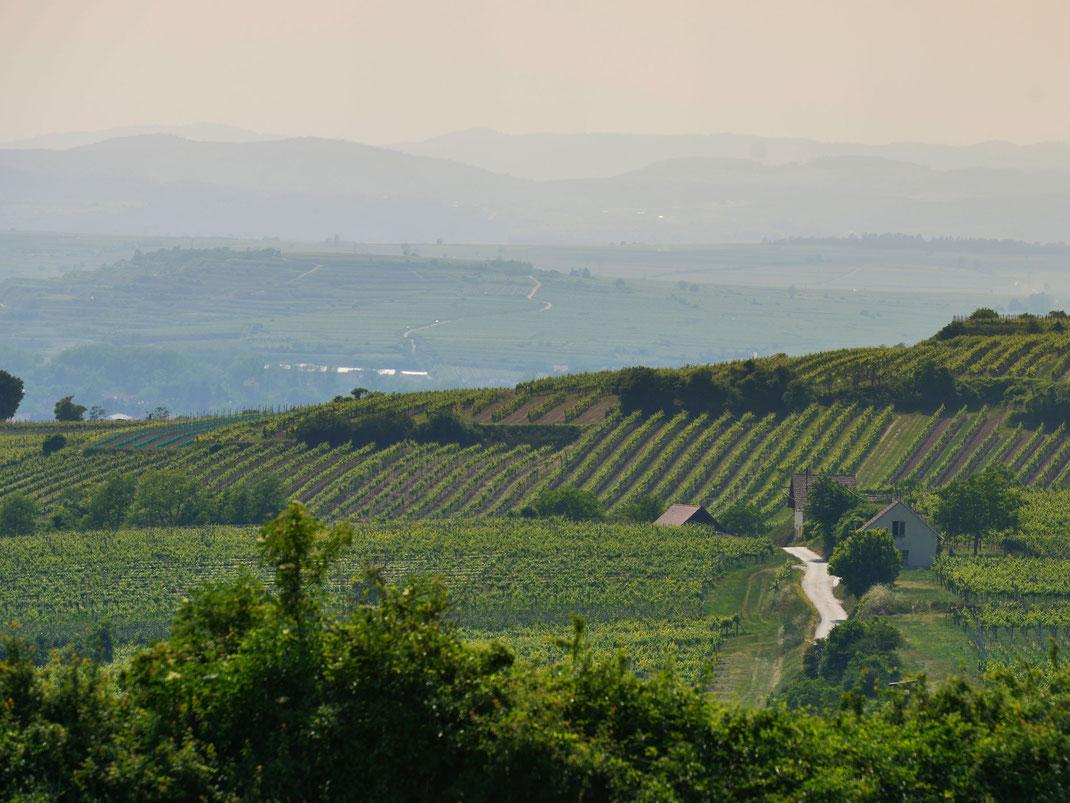 Blick über die Region Wagram