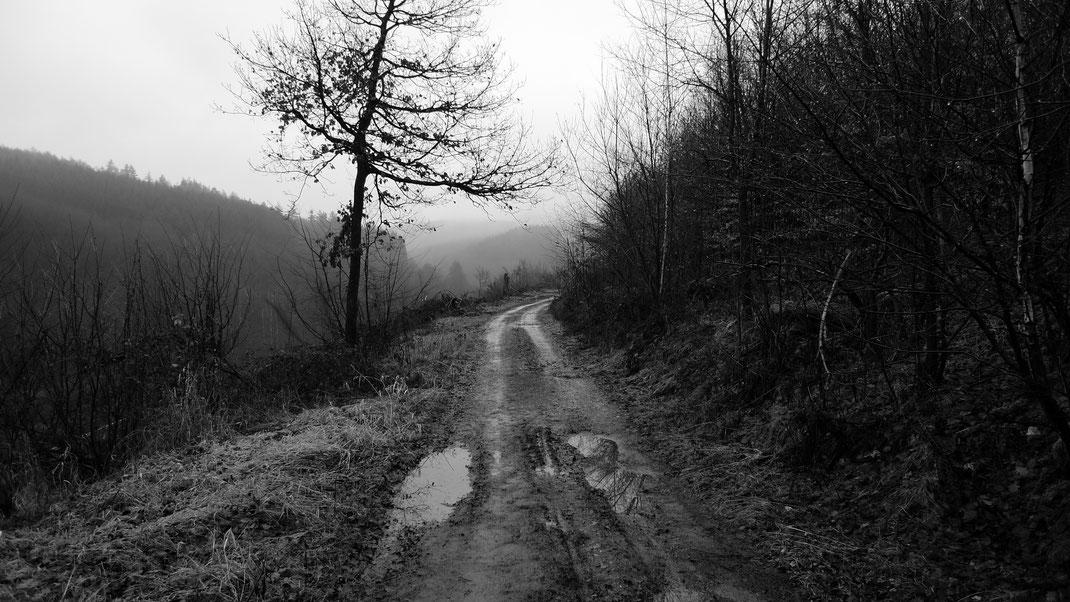 Der Weg in die Wälder