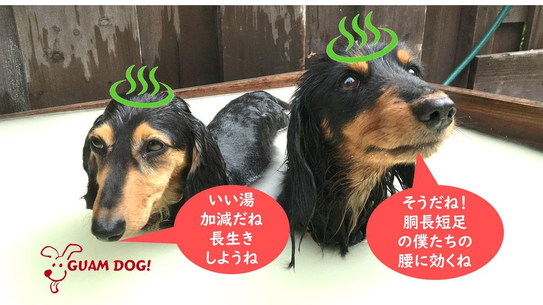 yado_image