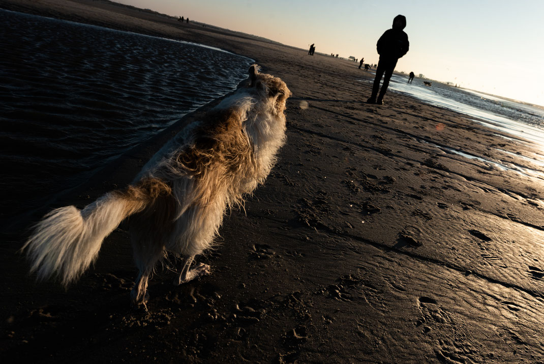 Hunde im Winter an der Nordsee