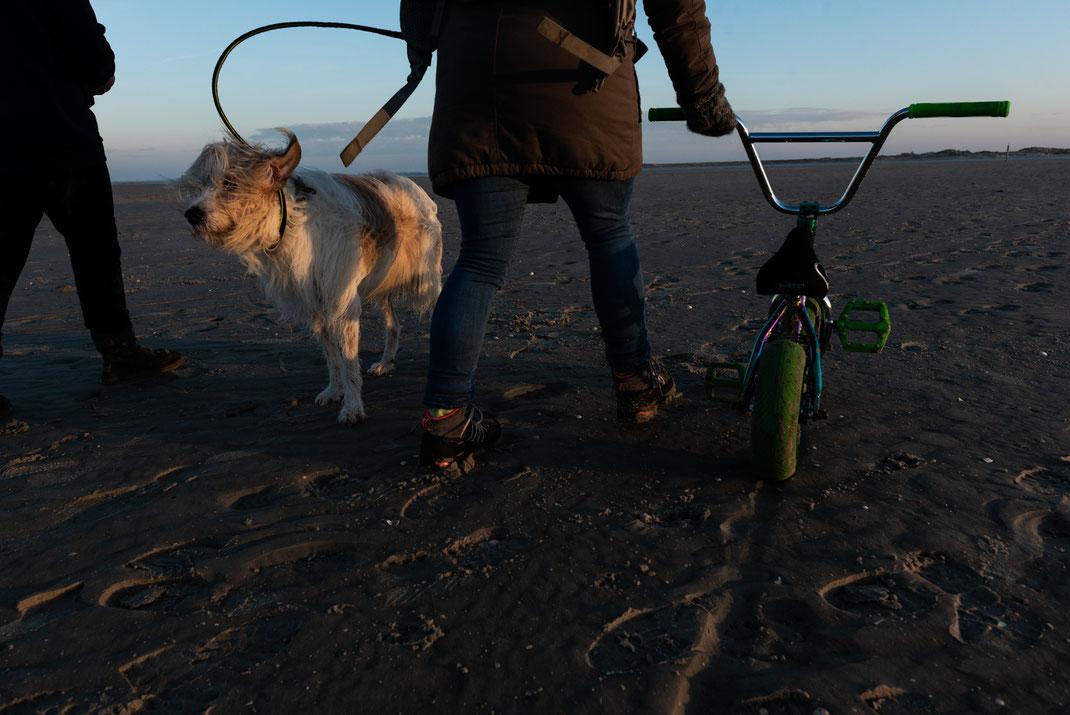 Hunde am Strand in St.-Peter