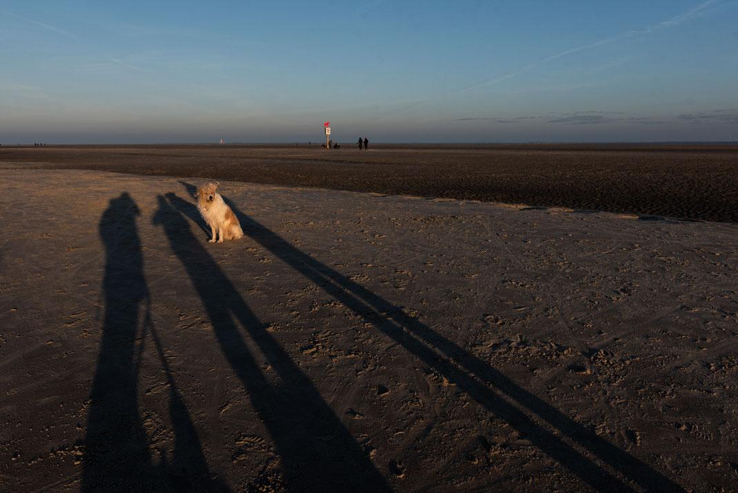 Hundefotografie an der Nordsee