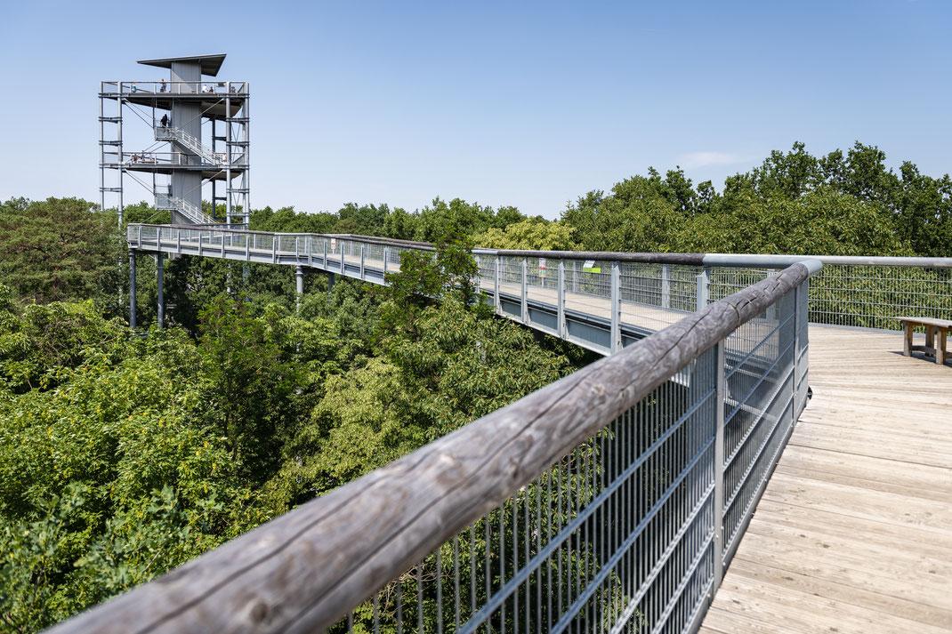 Aussichtsplattform Beelitz Baumkronenpfad