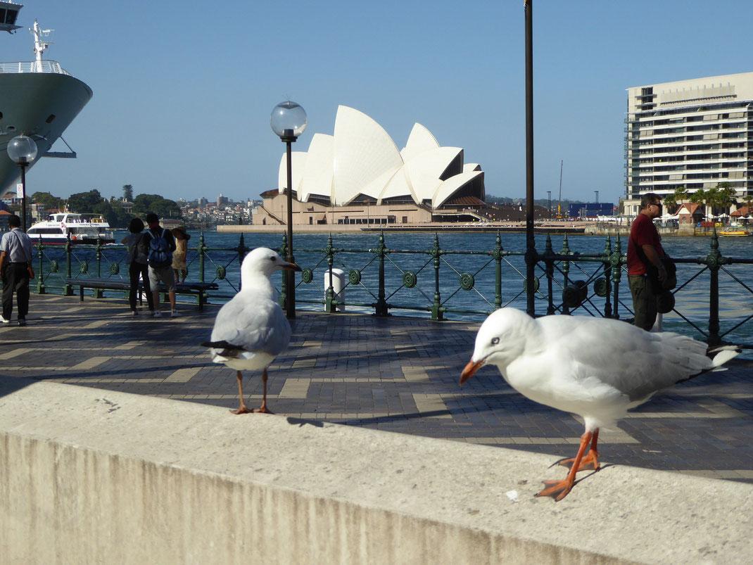 Sydney, Blick auf die Oper