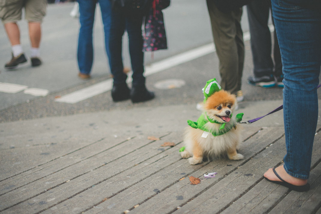 a little dog in a lizard costume at a halloween parade