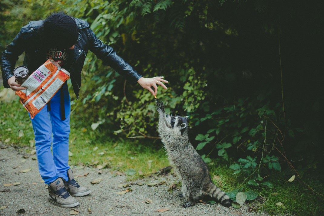 a passenger is feeding a raccoon in Stanley Park