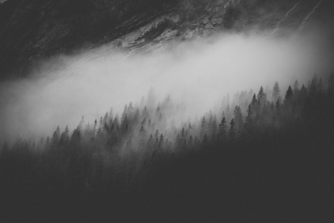a black & white image of fir treetops breaking through low hanging clouds