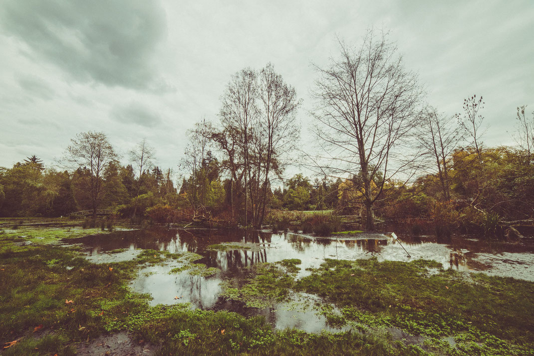 a swamp in Stanley Park