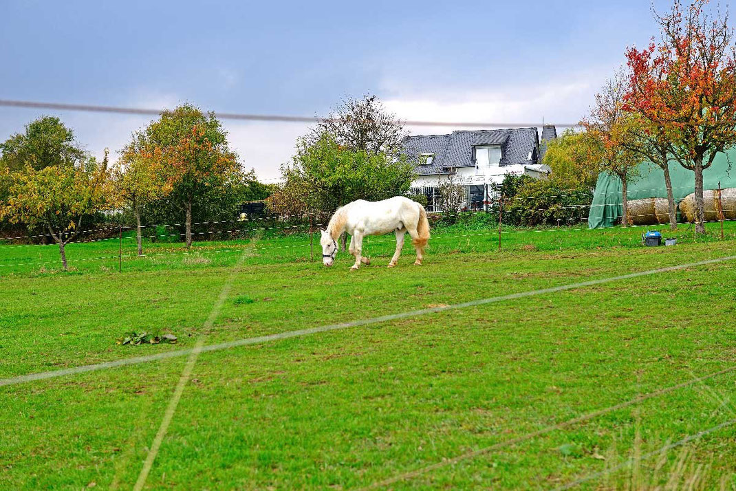 Neuleiningen, Nackterhof; Pferdekoppel