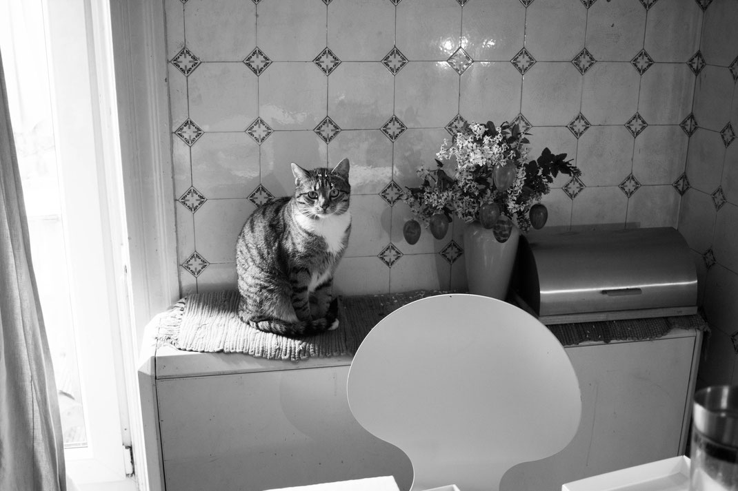 photography,black-and-white,cat