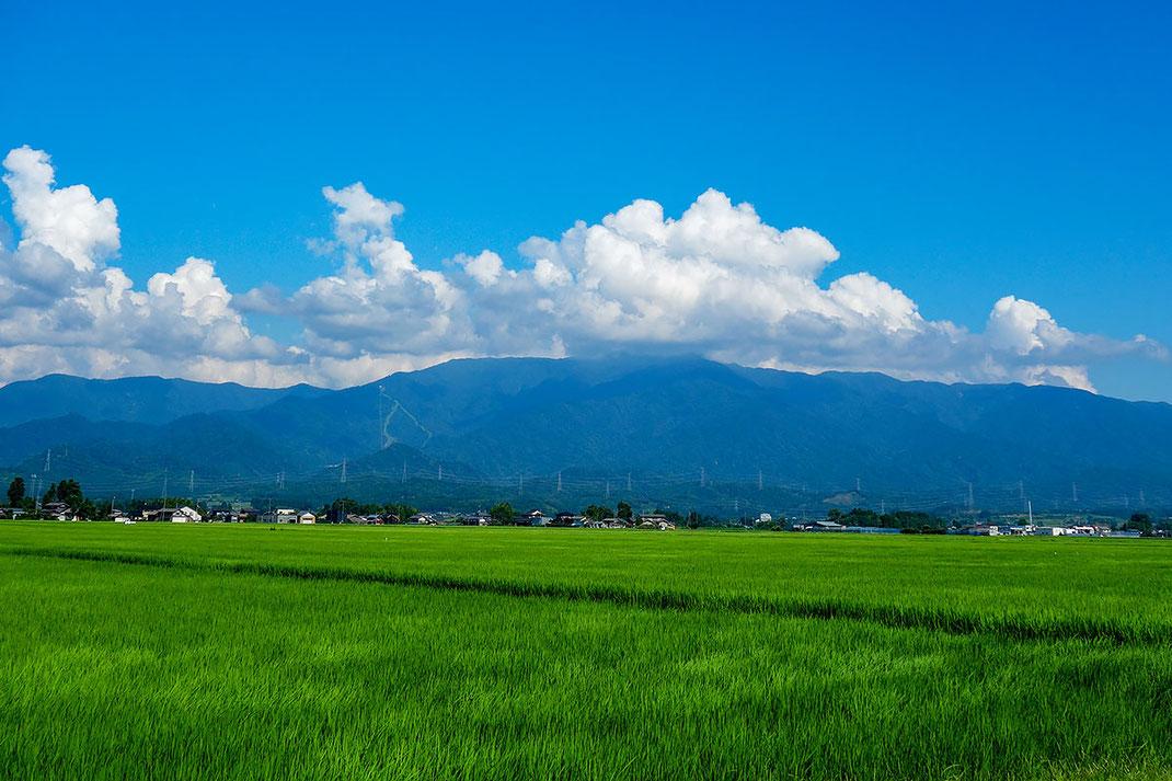 二王子岳をバックに川東の田園風景(小柳はじめ撮影)
