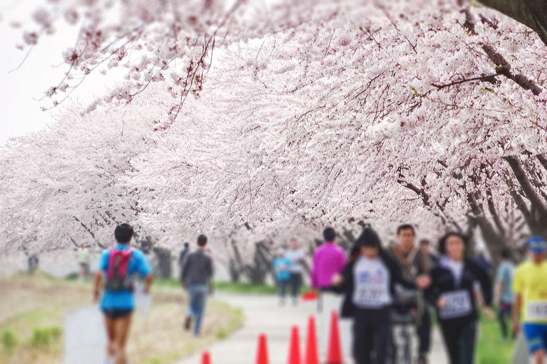 加治川堤『春RUN漫』しばたジョギング大会(小柳はじめ撮影)