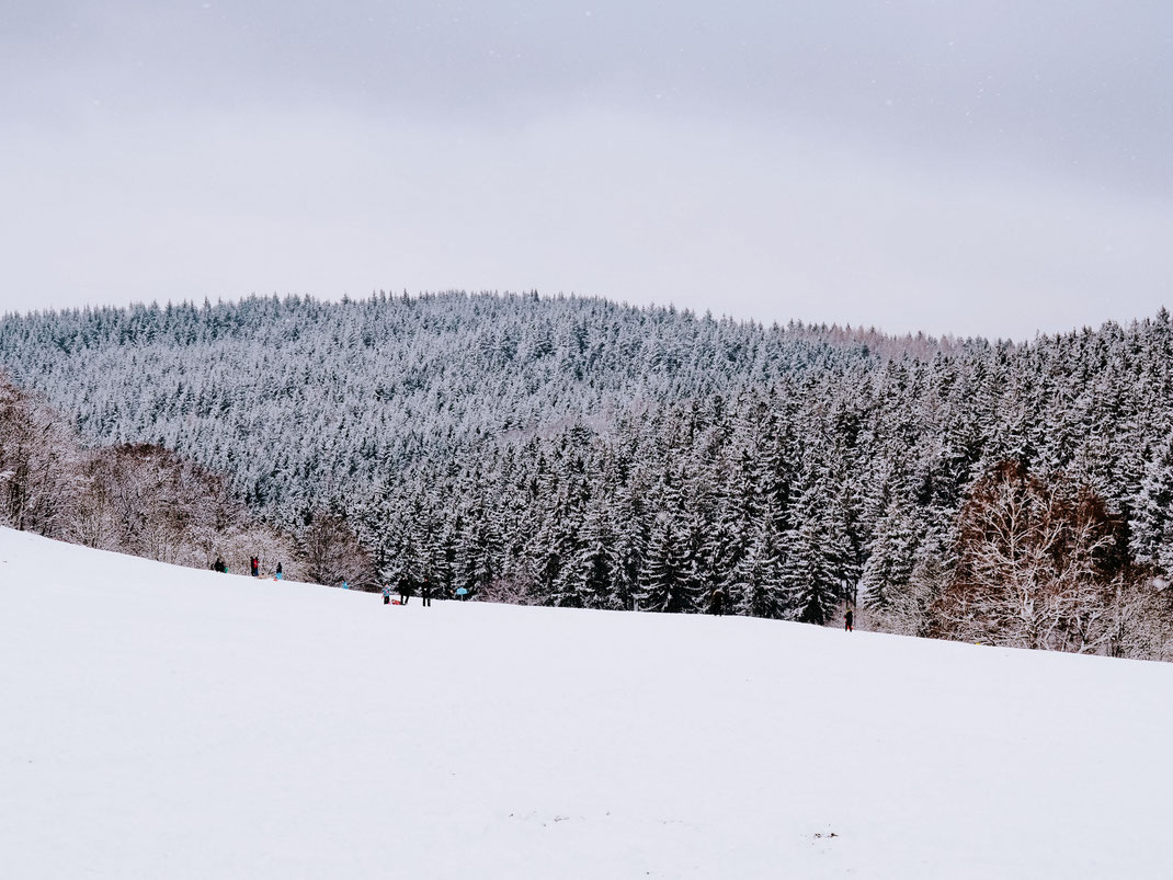 Beautiful forest covered with snow