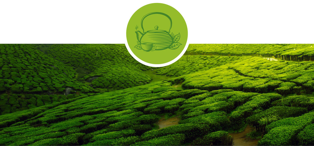 Tee; Früchtetee; Kräutertee; Aromastoffe; Cistuskraut; Ingwer; Lemon; Wildapfel; Apfel